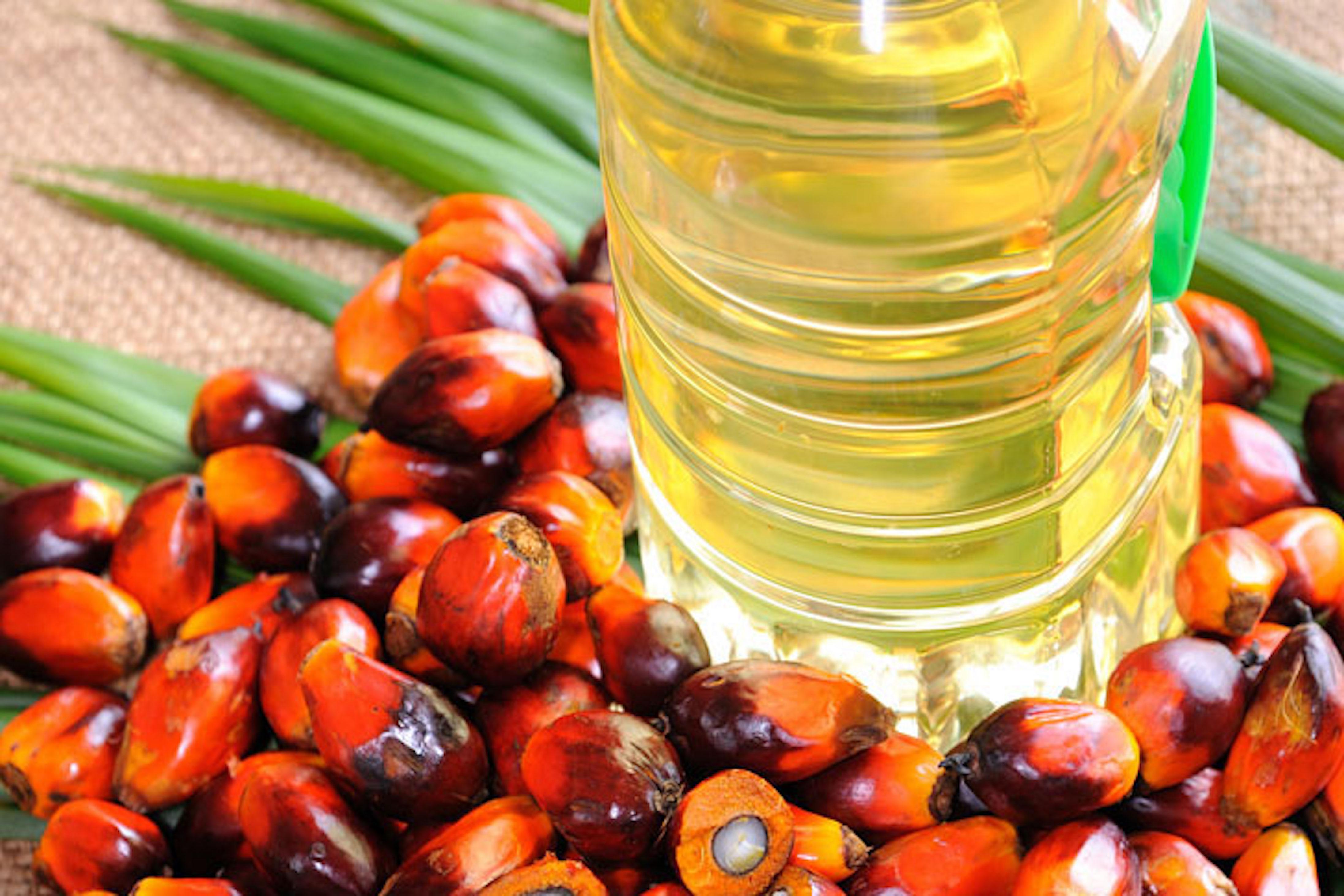 Nelle Marche la prima laurea senza olio di palma