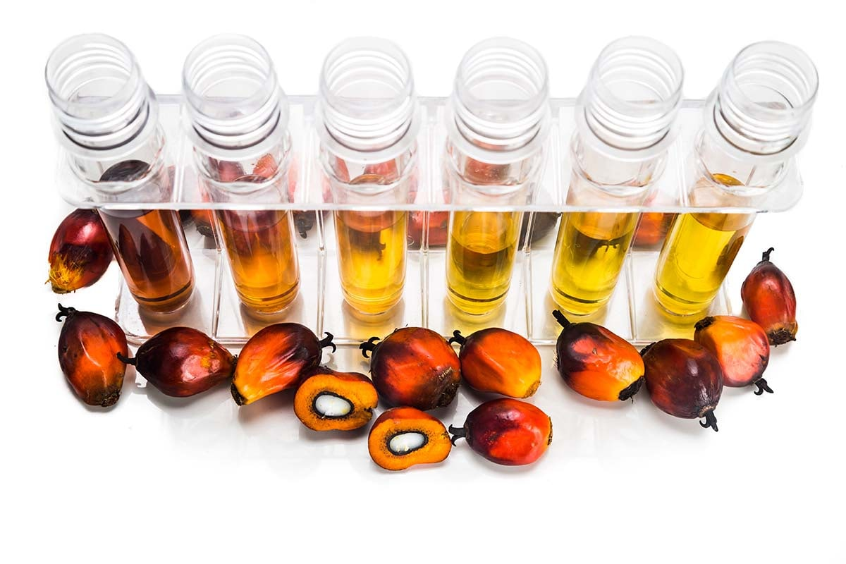 Per fare un olio ci vuole un seme (o un frutto). Gli oli spiegati bene (2)