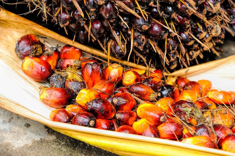 L'olio di palma provoca il cancro? Basta disinformazione, facciamo parlare la scienza