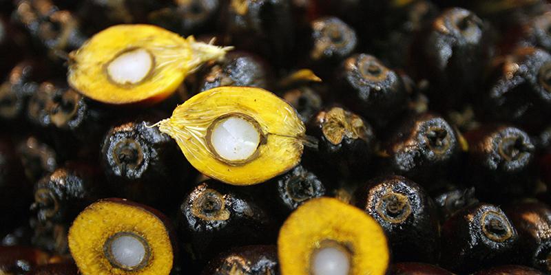 L'olio di palma? Non fa più male, parola di grillina