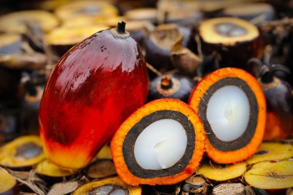 Lo Stato-balia e le tasse ai tempi dell'olio di palma
