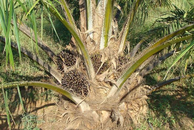 Alimenti, ricerca tedesca: l'olio di palma non è cancerogeno di per séu