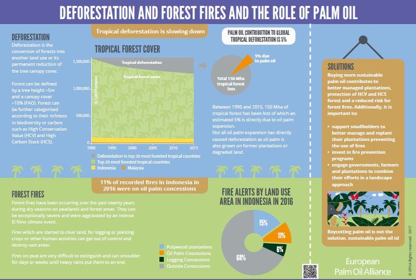 Deforestazione tropicale e incendi: qual è il ruolo dell'olio di palma?