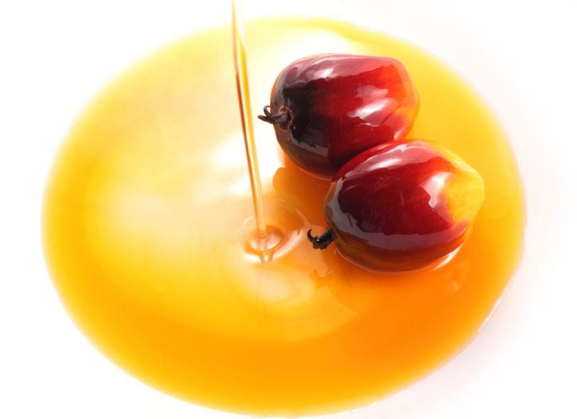L'olio di palma fa male? Il video degli studenti del Giordano Bruno