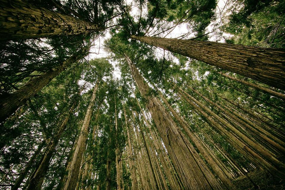 Il G7 sull'Ambiente è stato un flop, tranne sull'olio di palma