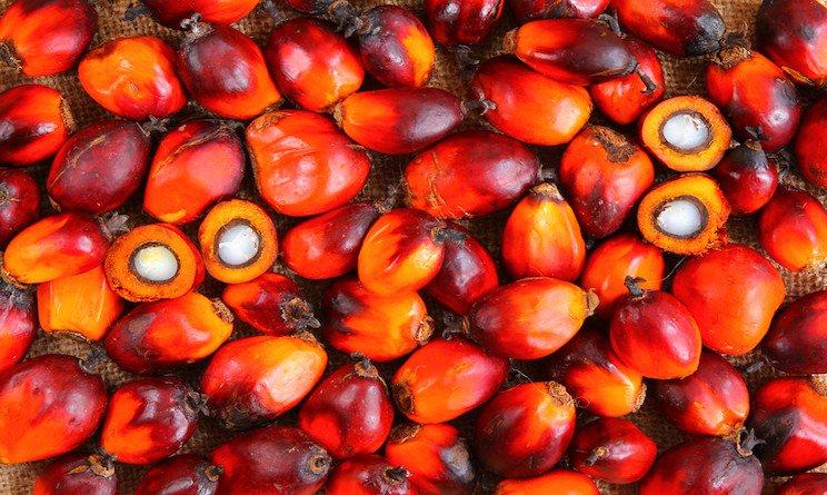 Il M5S e il tarlo dell'olio di palma