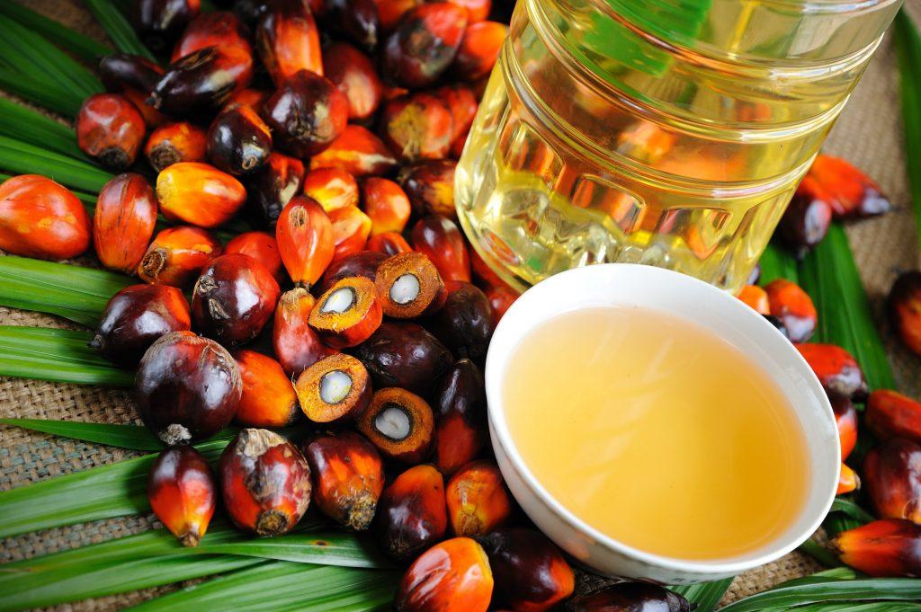 L'olio di palma non è nocivo: un nuovo studio lo conferma