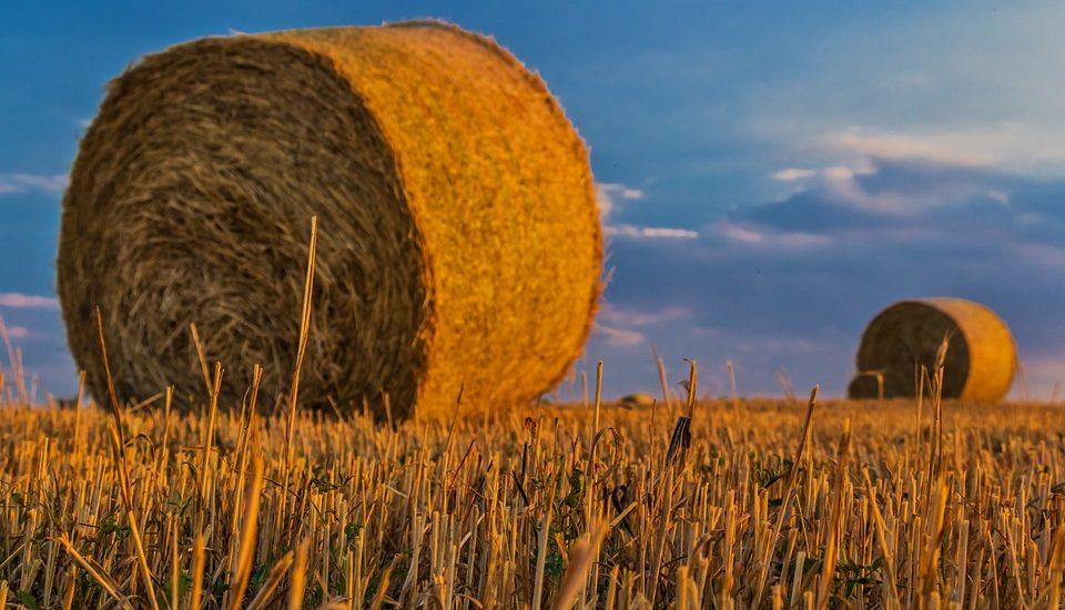 La battaglia del grano rischia di diventare un boomerang agricolo