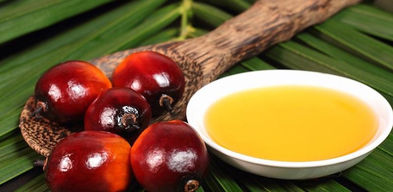L'Europa verso un olio di palma 100% sostenibile