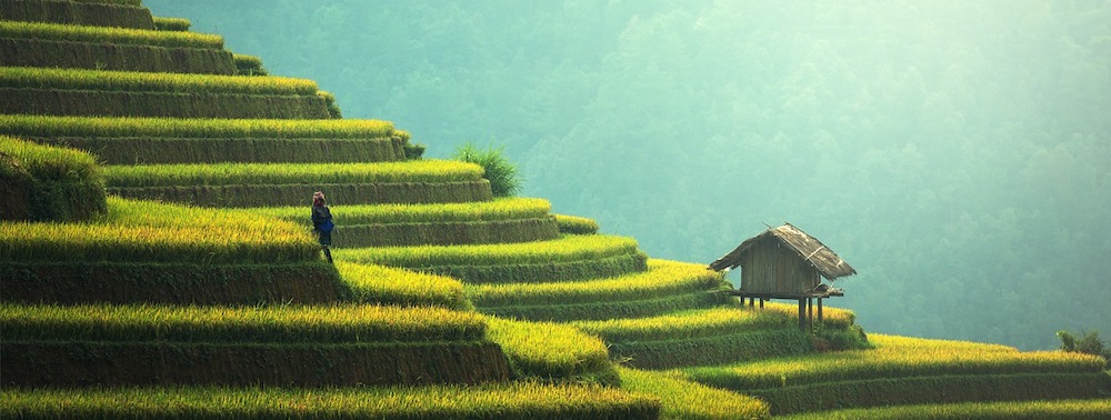Sostenibilità: Asia Batte Europa, i coltivatori asiatici rispondono con i fatti alle chiacchiere delle disperate lobby europee