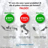 Foreste e Olio di Palma, Deforestazione, Indonesia, Malesia