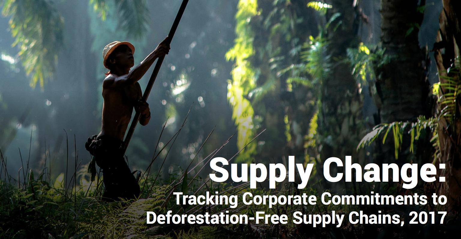 L'olio di palma è l'industria leader negli impegni per le foreste sostenibili
