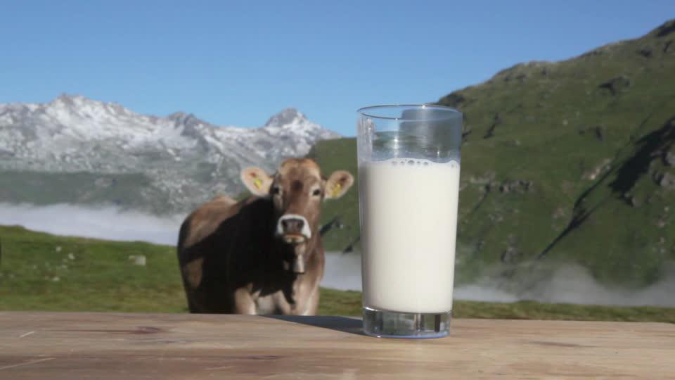 Il populismo alimentare se la prende con il latte Alpino!
