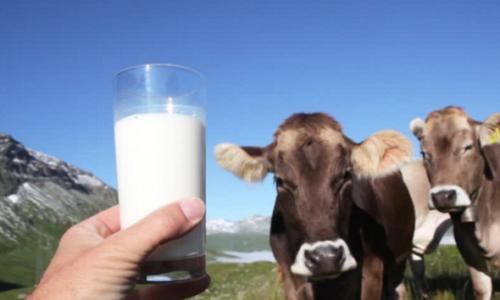 latte alpino