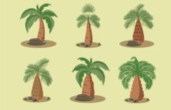 La riforestazione della palma da olio in Indonesia: uno studio conferma